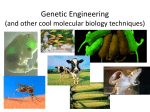 Genetic Engineering (and other cool molecular biology techniques)