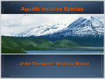 Invasive Species - Shuswap Watershed Project