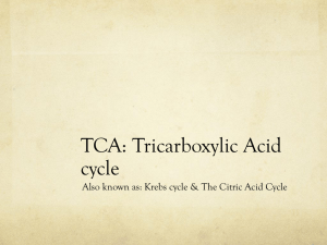 TCA: Tricarboxylic Acid cycle