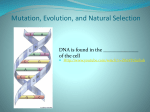 Mutation, Evolution, and Natural Selection