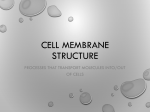 Cell membrane structure File