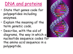 Lesson 1 DNA and proteins