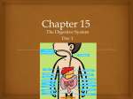 ch 15 Day 1 Mouth thru Esophagus