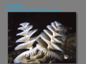 Chapter 15: Animals of the benthic environment