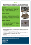 Mice - Ashford Borough Council