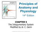 File - Physiology At Large