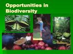 What is biodiversity? - Russell River Catchment