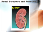 Renal Structure and Function