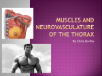 Muscles and Neurovasculature Of the THORAX