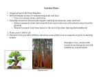 Vascular Plants • Largest group in the Plant Kingdom • Well