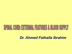 External features of spinal cord2009-03-07 04:492.5