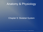 Ch. 9 Skeletal System Notes