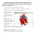 Blood Flow through the Human Heart Companion Sheet