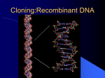 Restriction Enzymes, Vectors, and Genetic Libraries