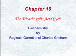 What Is the Chemical Logic of the TCA Cycle?