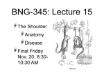 BNG-345: Lecture 15 The Shoulder Anatomy Disease Final Friday