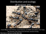 Distribution and impact of the invasive Pavement Ant, Tetramorium