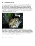 Brown Tree Frog - Sustainability@HKU