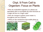 Chpt. 9 From Cell to Organism: Focus on Plants