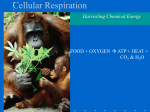 Cell Respiration ch. 9