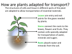 How are plants adapted for transport?