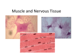 Muscle and Nervous Tissue ppt
