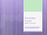 The Kreb`s Cycle - hrsbstaff.ednet.ns.ca