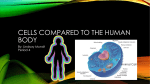 Cells Compared to The Human Body