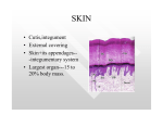 • Cutis,integument • External covering • Skin+its appendages