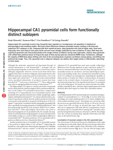 Hippocampal CA1 pyramidal cells form functionally