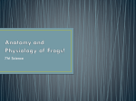 Anatomy and Physiology of Frogs!