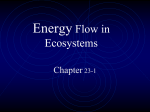 23-1 Energy Flow in Ecosystems Notes