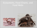 Ecosystems, Food Chains and Webs
