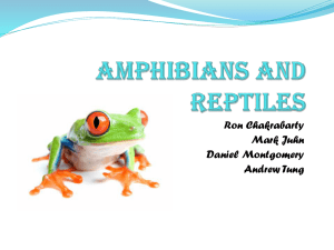 Amphibians and Reptiles - Vernon Hills High School
