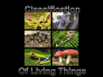 Classification of Living Things PowerPoint File
