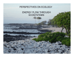 perspectives on ecology energy flow through