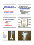 Spinal Cord PPT
