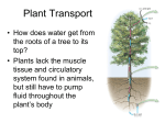 Transport in Plants – Chapter 38