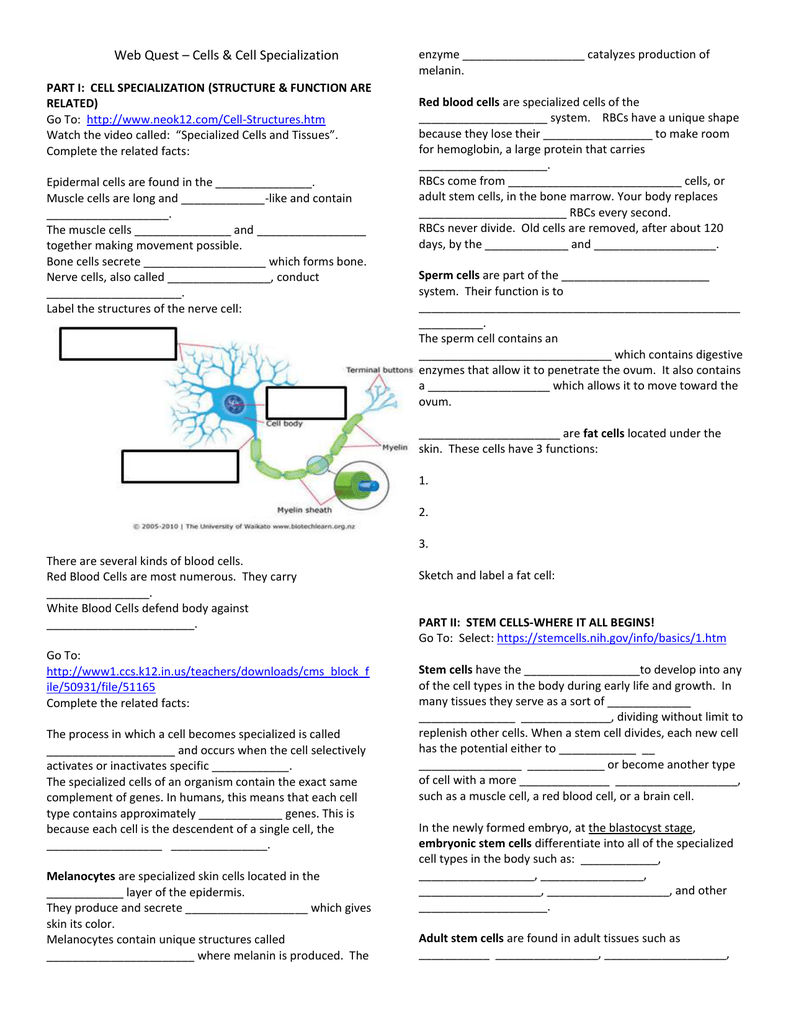 Cell Specialization Webquest – Cell Specialization Worksheet