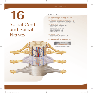 16. Spinal Cord and Spinal Nerves
