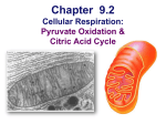 Lecture 019--Respiration 3 (Kreb`s Cycle)