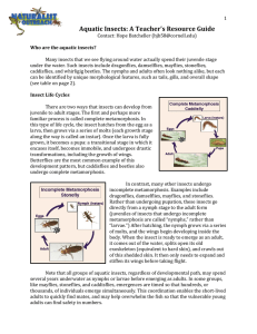 Aquatic Insects: A Teacher`s Resource Guide
