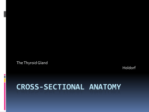 cross-sectional-anatomy-thyroid