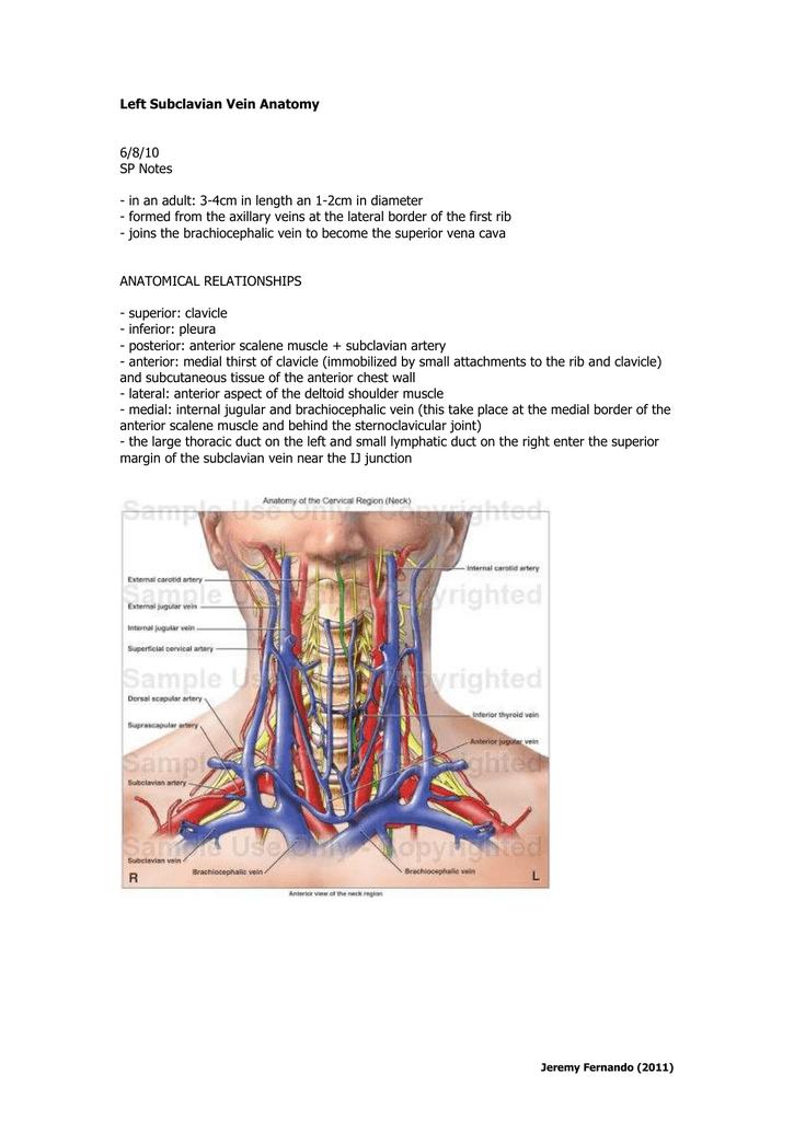 Brachiocephalic Vein Anatomy Gallery - human body anatomy