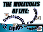 Biochemistry Molecules of Life