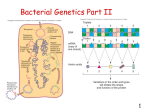 Bacterial Genetics Part II