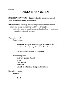 Digestive System - Bakersfield College