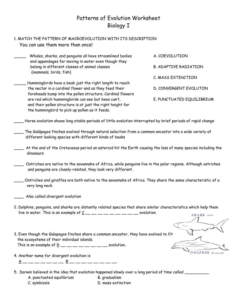 Patterns of Evolution Worksheet