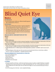 blind_quiet_eye