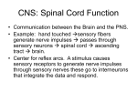 CNS: Spinal Cord Function
